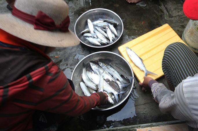 Từng đàn cá đối từ biển ngược vào cửa sông An Hòa - Ảnh 7.