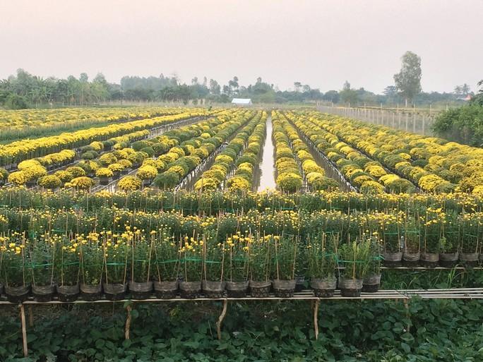 Chưa Tết, làng hoa lớn nhất miền Tây đã nườm nượp khách - Ảnh 2.