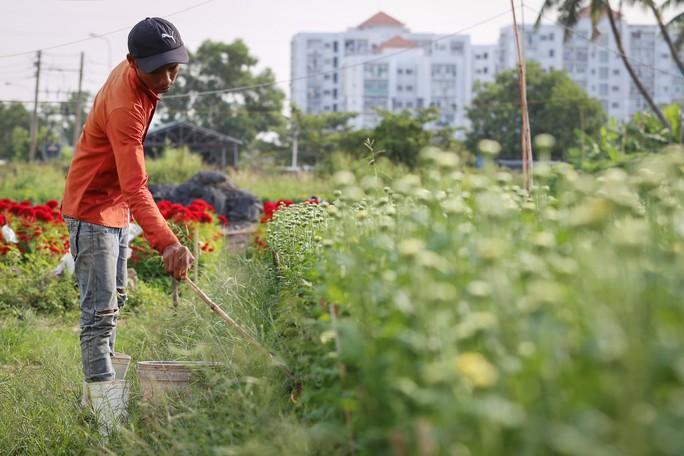 TP HCM: Trăm hoa đua nở chờ Tết - Ảnh 11.