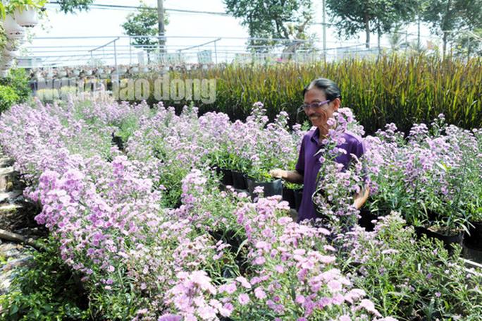 Lão nông 70 tuổi tiết lộ lí do trồng toàn hoa kiểng màu tím, thu hơn 15 tỉ/năm - Ảnh 2.