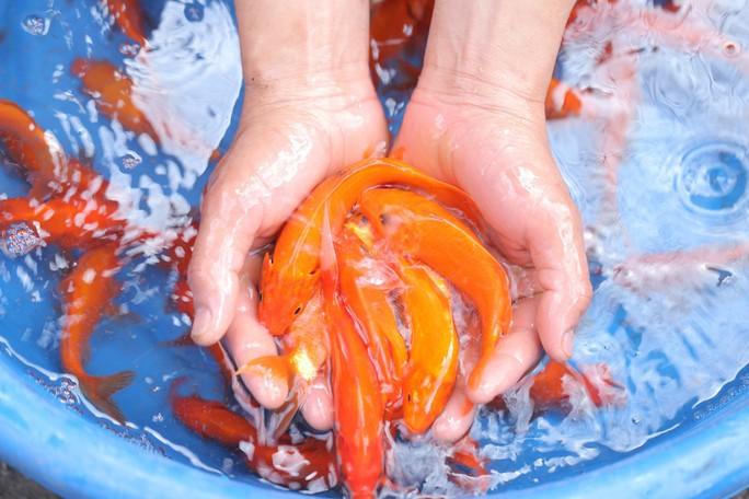 Sinh viên lên cầu Long Biên hỗ trợ người dân thả cá không thả rác - Ảnh 1.