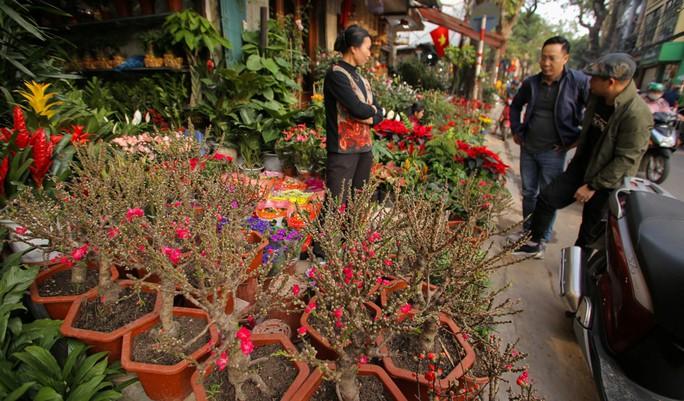 Đào mini Trung Quốc giá tiền triệu tràn ngập chợ hoa - Ảnh 1.