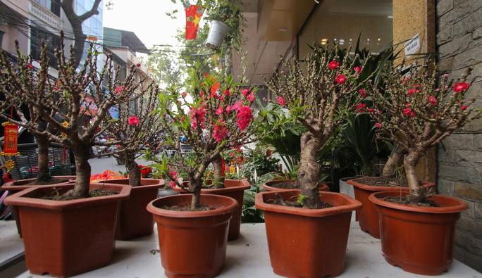 Đào mini Trung Quốc giá tiền triệu tràn ngập chợ hoa - Ảnh 2.