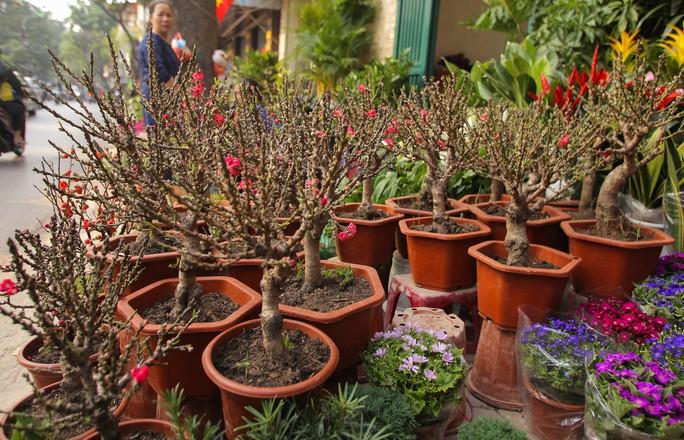 Đào mini Trung Quốc giá tiền triệu tràn ngập chợ hoa - Ảnh 3.