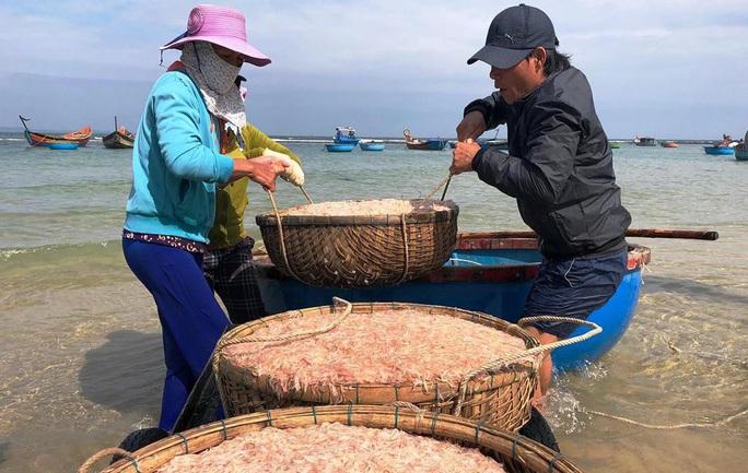 Cận Tết, ngư dân Quảng Ngãi trúng đậm mùa ruốc - Ảnh 2.