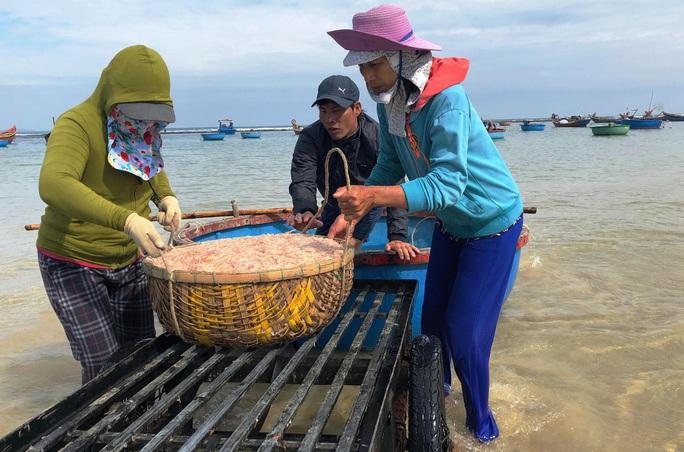 Cận Tết, ngư dân Quảng Ngãi trúng đậm mùa ruốc - Ảnh 4.