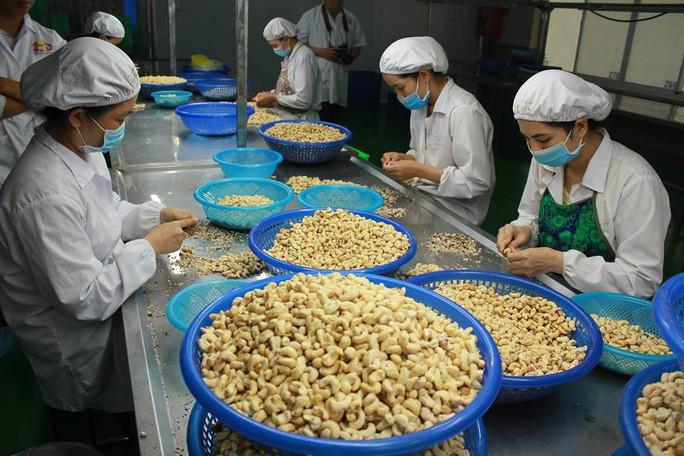 Việt Nam đặt mục tiêu vào tốp 15 nền nông nghiệp phát triển nhất thế giới - Ảnh 2.