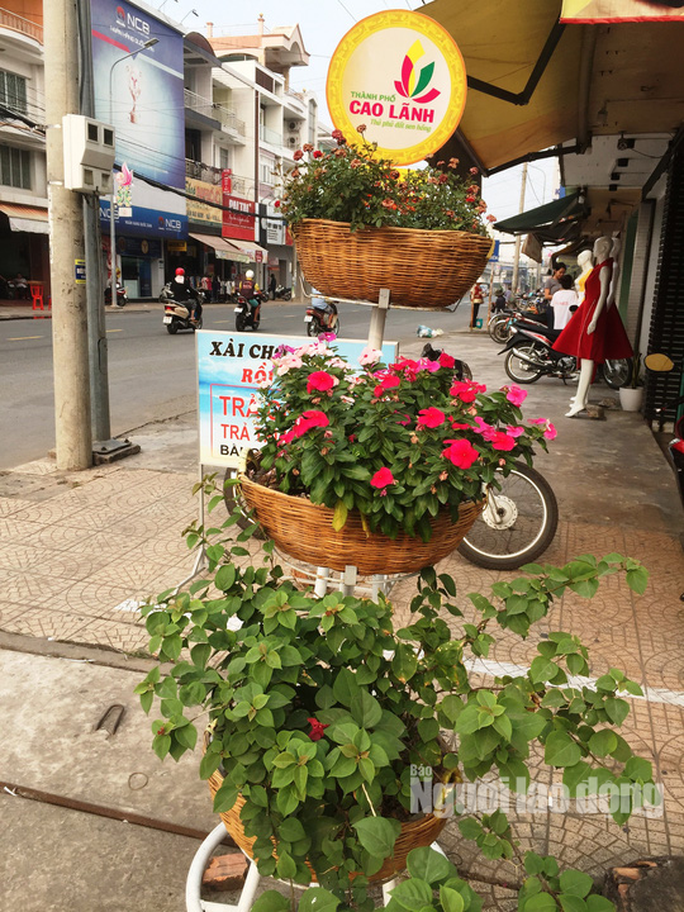 Độc đáo những tuyến đường đầy hoa ở đất Sen hồng Đồng Tháp - Ảnh 3.
