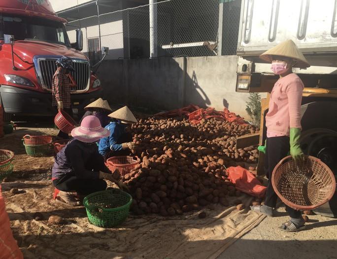 Người tiêu dùng TP HCM chê rau trái Trung Quốc - Ảnh 1.