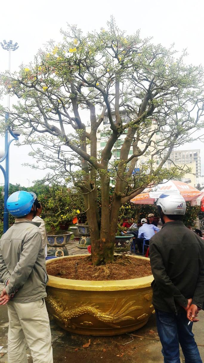 Lão mai được hét giá 3 tỉ đồng tại chợ hoa Xuân Đà Nẵng - Ảnh 5.