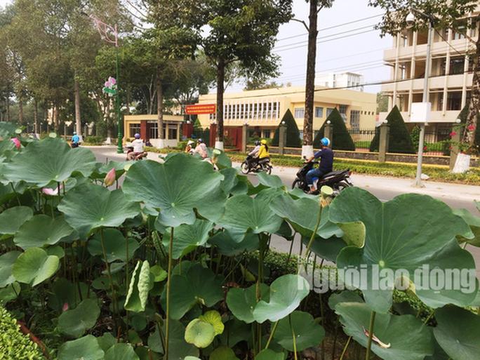 Độc đáo những tuyến đường đầy hoa ở đất Sen hồng Đồng Tháp - Ảnh 9.
