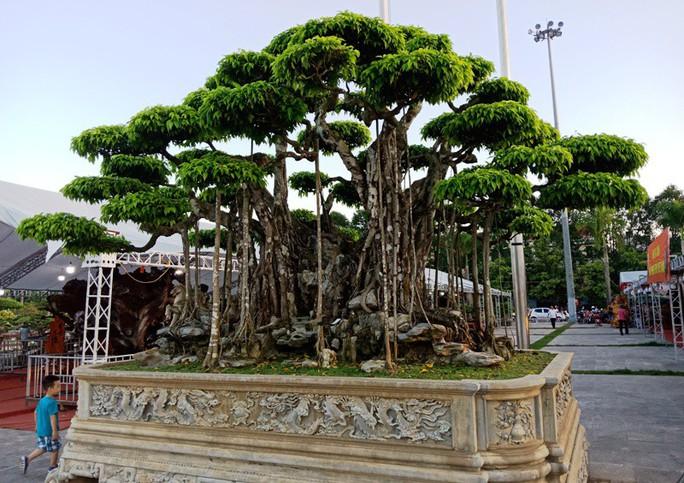 Choáng với cây sanh cổ được khách Nhật định giá hơn 20 triệu USD - Ảnh 4.