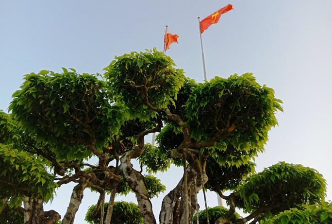 Choáng với cây sanh cổ được khách Nhật định giá hơn 20 triệu USD - Ảnh 7.