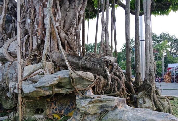 Choáng với cây sanh cổ được khách Nhật định giá hơn 20 triệu USD - Ảnh 15.