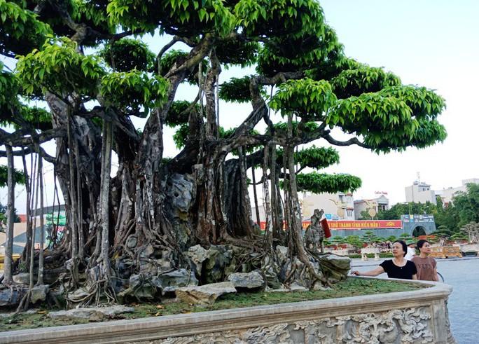 Choáng với cây sanh cổ được khách Nhật định giá hơn 20 triệu USD - Ảnh 5.