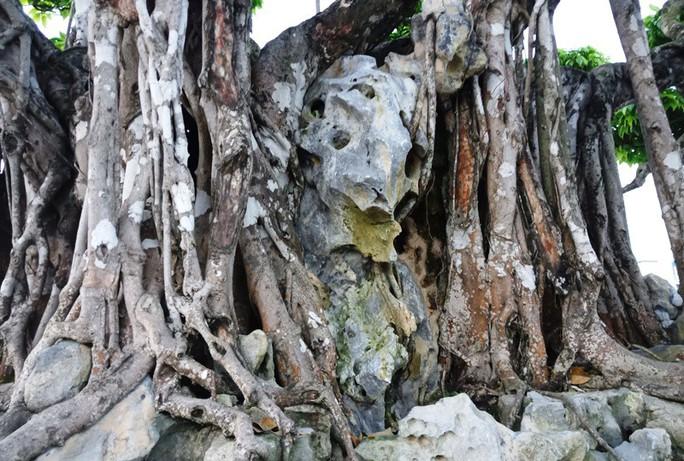 Choáng với cây sanh cổ được khách Nhật định giá hơn 20 triệu USD - Ảnh 12.