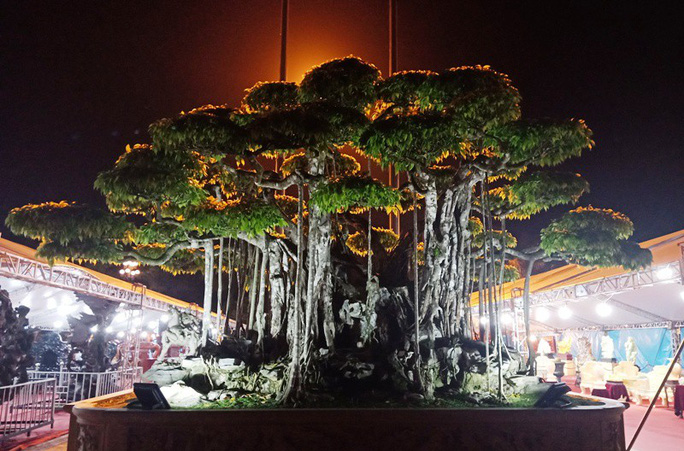 Choáng với cây sanh cổ được khách Nhật định giá hơn 20 triệu USD - Ảnh 16.