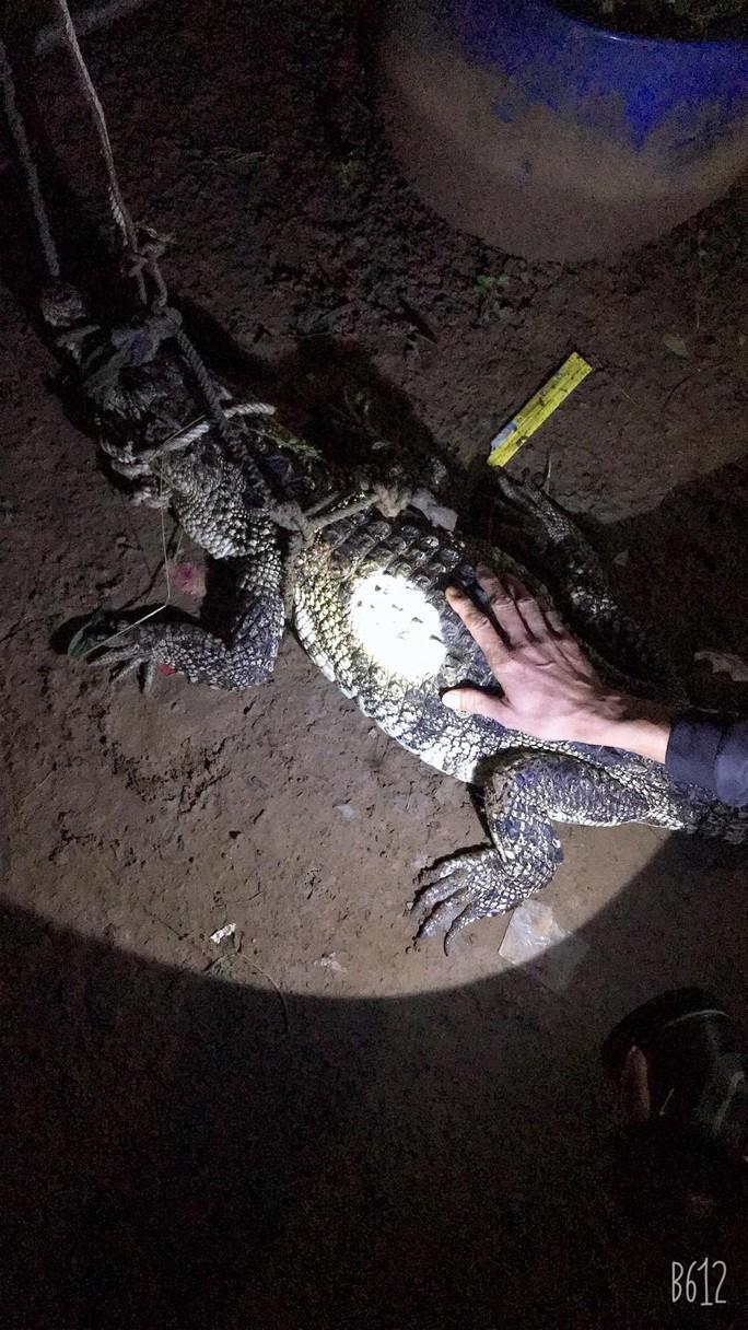 Cá sấu sông Đồng Nai vào nhà dân bắt gà - Ảnh 1.