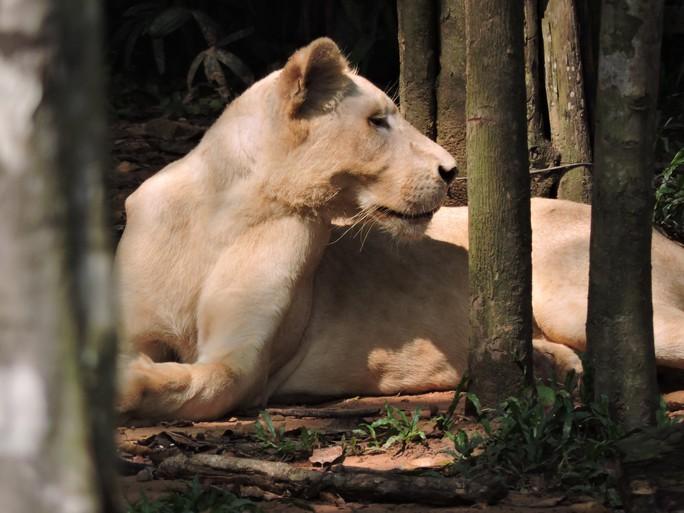 Clip: Những khoảnh khắc cưng muốn xỉu ở  vườn thú Safari Phú Quốc - Ảnh 7.