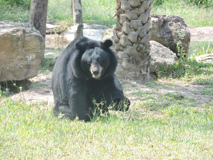 Clip: Những khoảnh khắc cưng muốn xỉu ở  vườn thú Safari Phú Quốc - Ảnh 11.