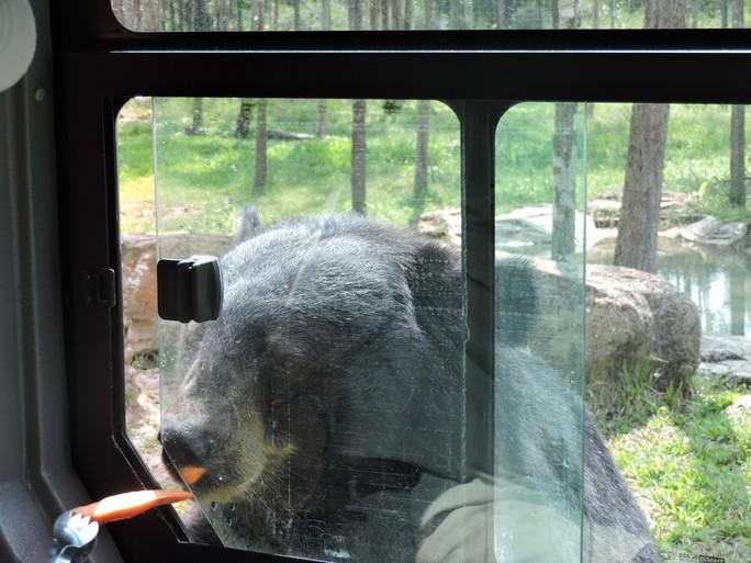 Clip: Những khoảnh khắc cưng muốn xỉu ở  vườn thú Safari Phú Quốc - Ảnh 10.
