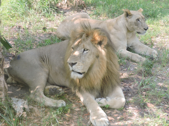 Clip: Những khoảnh khắc cưng muốn xỉu ở  vườn thú Safari Phú Quốc - Ảnh 2.
