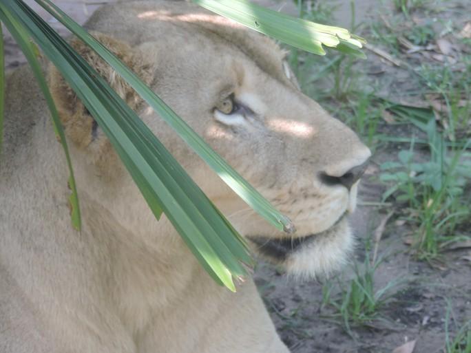 Clip: Những khoảnh khắc cưng muốn xỉu ở  vườn thú Safari Phú Quốc - Ảnh 5.