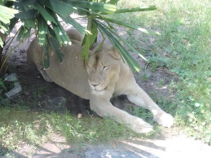 Clip: Những khoảnh khắc cưng muốn xỉu ở  vườn thú Safari Phú Quốc - Ảnh 3.
