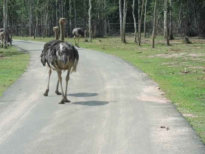 Clip: Những khoảnh khắc cưng muốn xỉu ở  vườn thú Safari Phú Quốc - Ảnh 34.