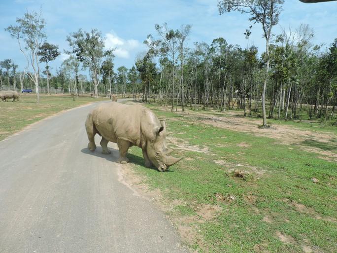 Clip: Những khoảnh khắc cưng muốn xỉu ở  vườn thú Safari Phú Quốc - Ảnh 30.