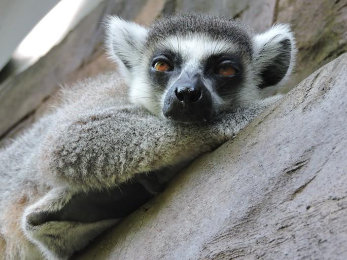 Clip: Những khoảnh khắc cưng muốn xỉu ở  vườn thú Safari Phú Quốc - Ảnh 20.