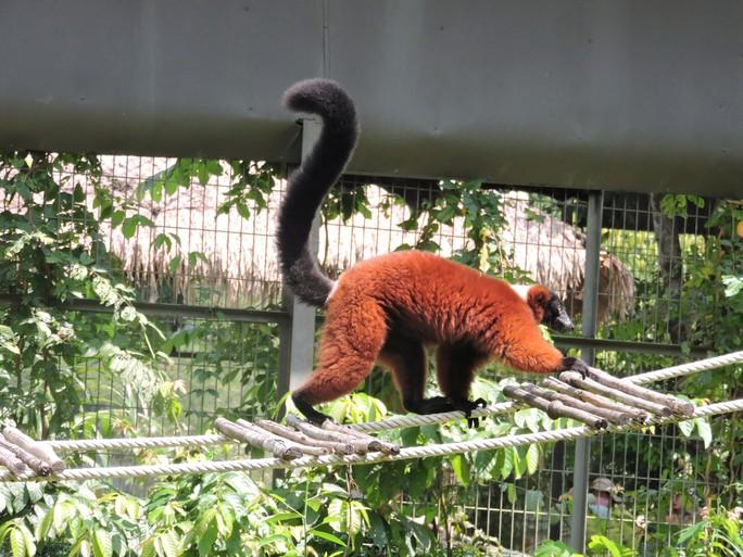 Clip: Những khoảnh khắc cưng muốn xỉu ở  vườn thú Safari Phú Quốc - Ảnh 18.