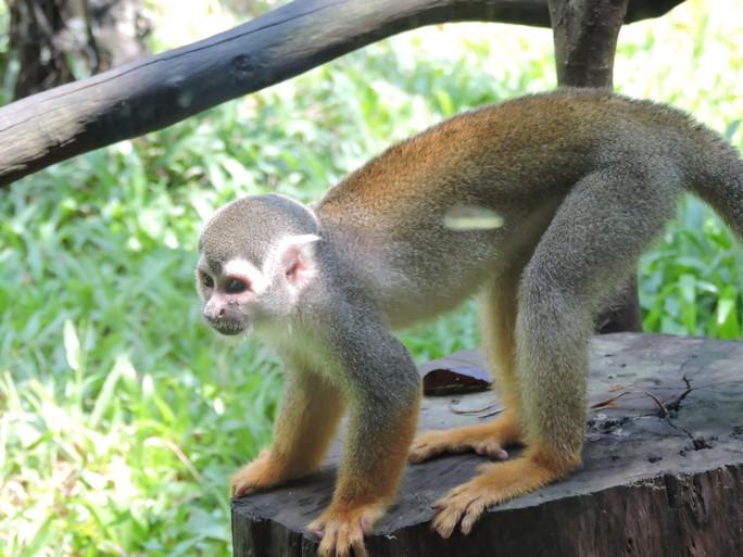 Clip: Những khoảnh khắc cưng muốn xỉu ở  vườn thú Safari Phú Quốc - Ảnh 13.