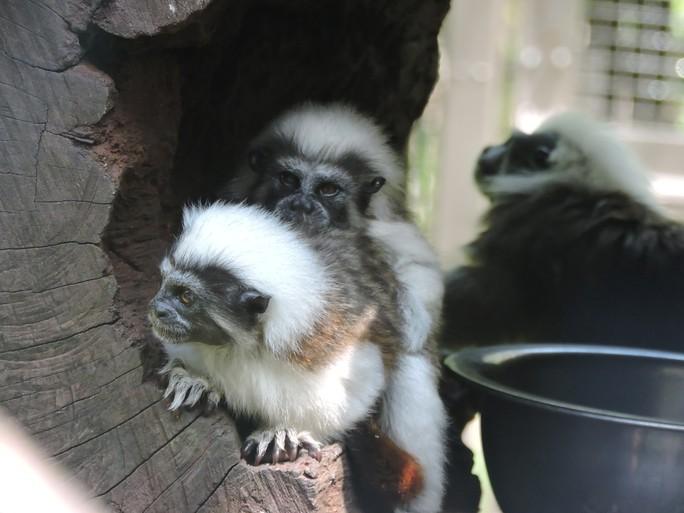 Clip: Những khoảnh khắc cưng muốn xỉu ở  vườn thú Safari Phú Quốc - Ảnh 23.