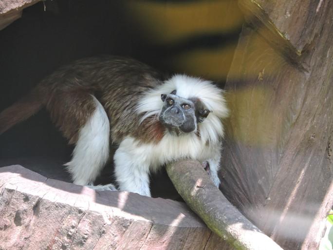 Clip: Những khoảnh khắc cưng muốn xỉu ở  vườn thú Safari Phú Quốc - Ảnh 24.
