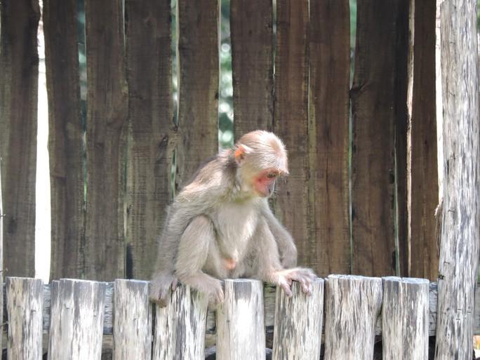 Clip: Những khoảnh khắc cưng muốn xỉu ở  vườn thú Safari Phú Quốc - Ảnh 27.