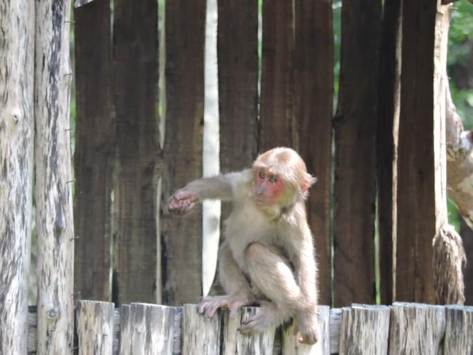 Clip: Những khoảnh khắc cưng muốn xỉu ở  vườn thú Safari Phú Quốc - Ảnh 26.