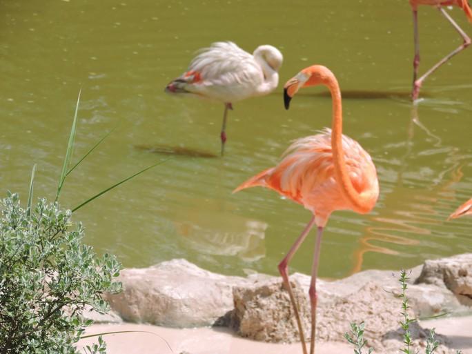 Clip: Những khoảnh khắc cưng muốn xỉu ở  vườn thú Safari Phú Quốc - Ảnh 35.