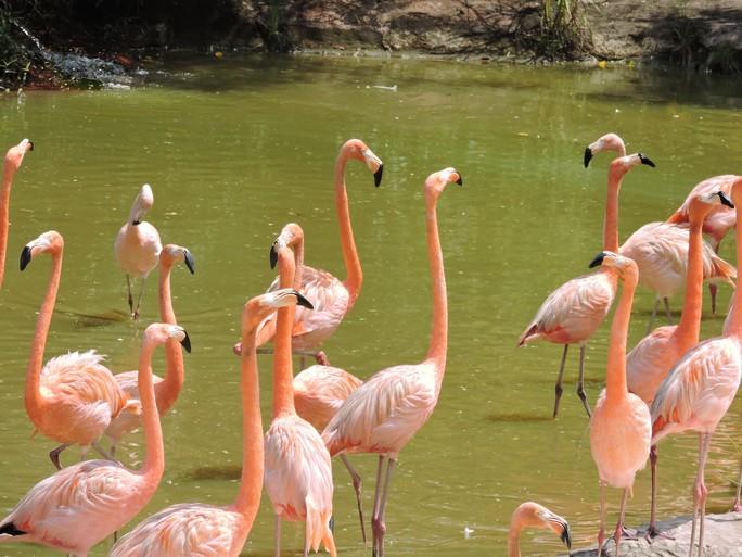 Clip: Những khoảnh khắc cưng muốn xỉu ở  vườn thú Safari Phú Quốc - Ảnh 36.