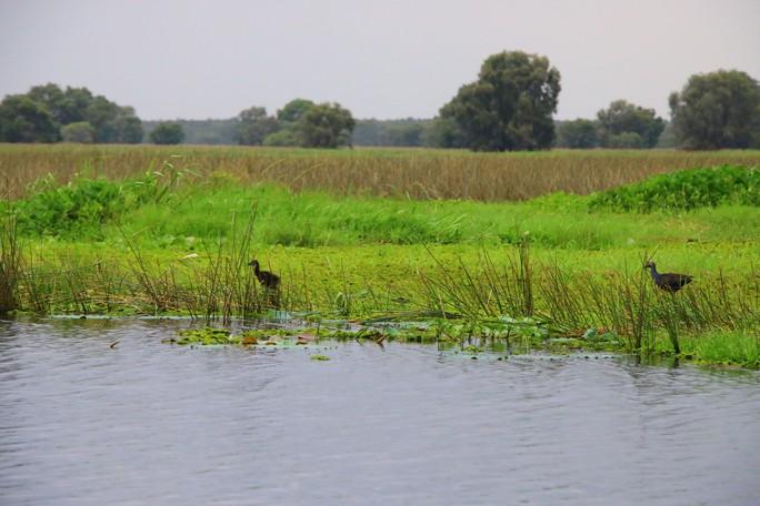 Vườn Quốc gia Tràm Chim bị đe dọa - Ảnh 1.
