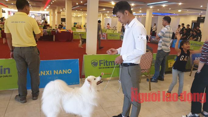 Hàng trăm chó đẹp đến từ nhiều quốc gia tranh sắc tại Bình Dương - Ảnh 5.