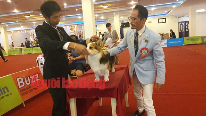 Hàng trăm chó đẹp đến từ nhiều quốc gia tranh sắc tại Bình Dương - Ảnh 3.