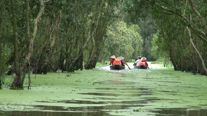 Một ngày ở rừng tràm Trà Sư mùa nước nổi - Ảnh 2.