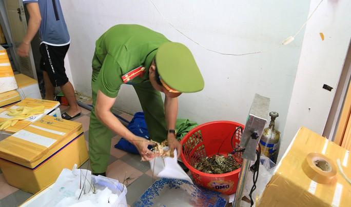 Tôm hùm giá rẻ bơm tạp chất tăng trọng bị phát hiện tại Đà Nẵng - Ảnh 1.