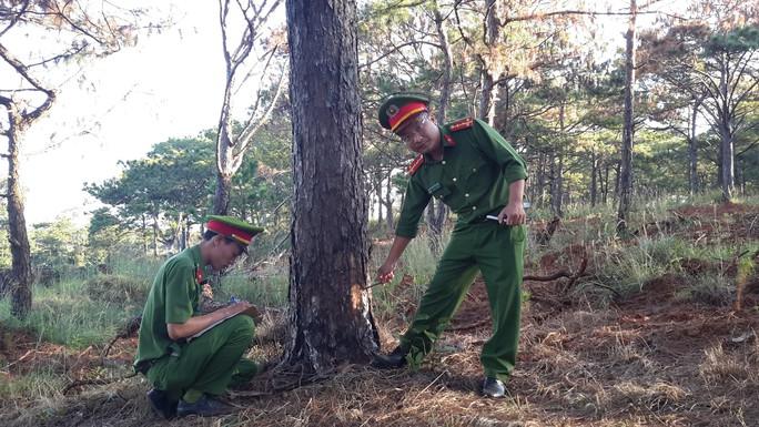 Tạm giữ 5 đối tượng đầu độc hơn 1.000 cây thông ven đường Hồ Chí Minh - Ảnh 2.