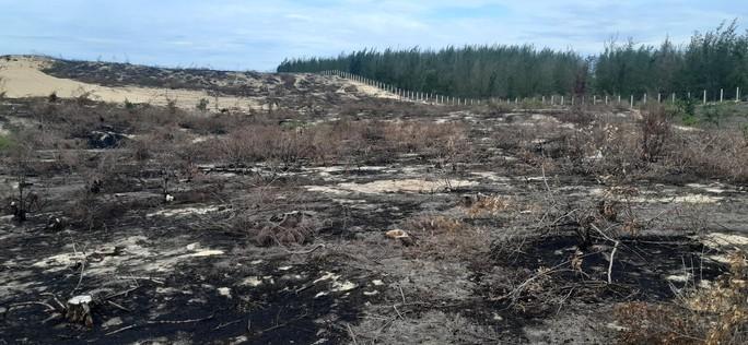 Tạm dừng dự án để mất 140 ha rừng nhằm phục vụ công tác điều tra - Ảnh 1.