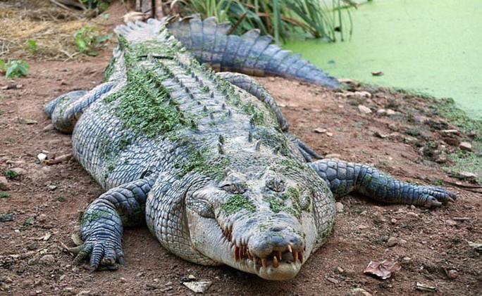 Bé gái chọc mắt cá sấu cứu bạn - Ảnh 1.