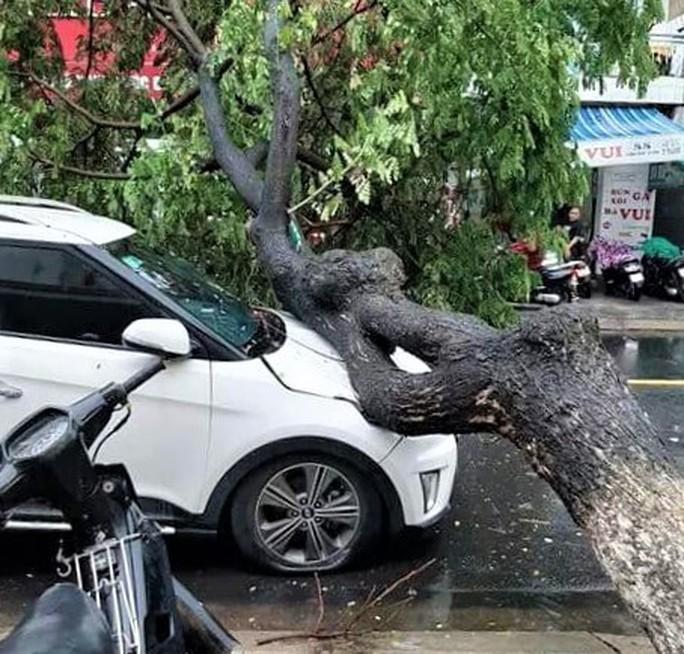 Đà Nẵng: Ảnh hưởng nhẹ của bão, hàng loạt cây xanh đã bật gốc - Ảnh 1.