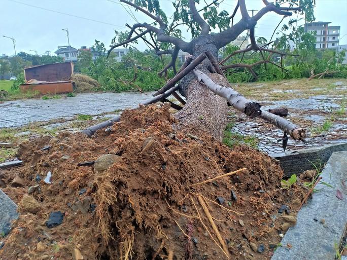 Đà Nẵng: Ảnh hưởng nhẹ của bão, hàng loạt cây xanh đã bật gốc - Ảnh 4.