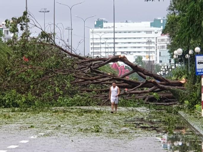 Bình Định: Ngổn ngang sau cơn bão số 5 - Ảnh 6.